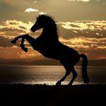 zadel paard